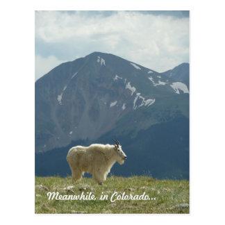 Cartão Postal Cabra de montanha na grande partilha