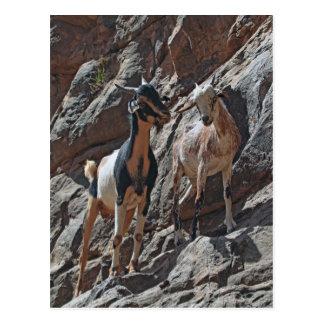 Cartão Postal Cabras em um penhasco da rocha