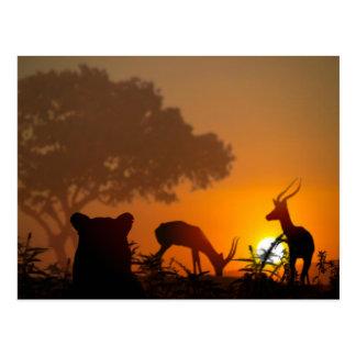 Cartão Postal Caça do leão