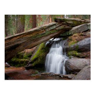 Cartão Postal Cachoeira da sequóia