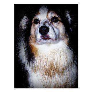 Cartão Postal Cachorrinho sujo do escavador