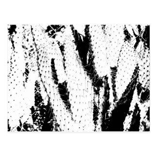 Cartão Postal Cacto da orelha de elefante em preto e branco