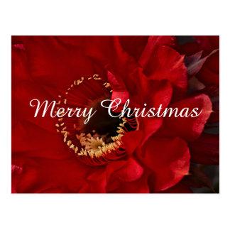 Cartão Postal Cacto do Firelight, Feliz Natal