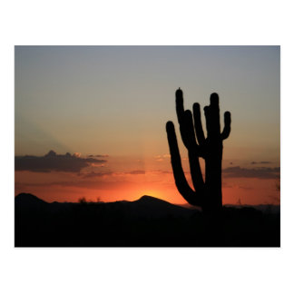 Cartão Postal Cacto do Saguaro no por do sol