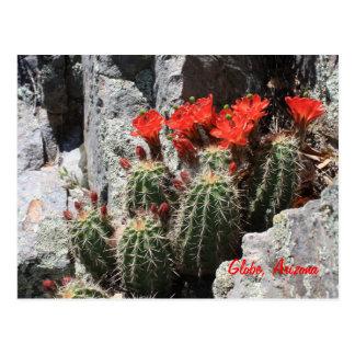 Cartão Postal Cacto na rocha