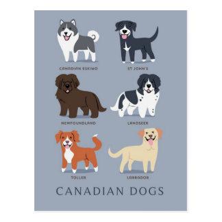 Cartão Postal Cães canadenses
