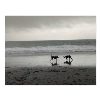 Cartão Postal Cães da praia