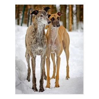 Cartão Postal Cães de filhote de cachorro do galgo rajados e