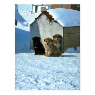 Cartão Postal Cães de trenó do bebê, Greenland