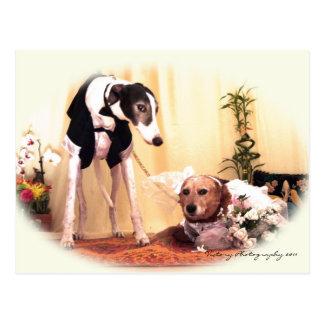 Cartão Postal Cães do casamento
