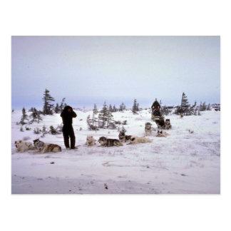 Cartão Postal Cães que descansam, Churchill, Manitoba