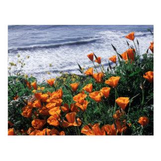 Cartão Postal Califórnia, costa grande de Sur, papoila de