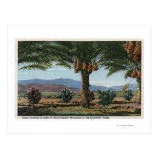 Cartão Postal CaliforniaDates que cresce no Coachella