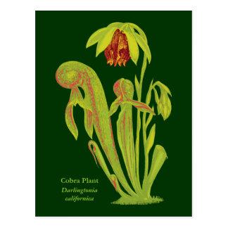 Cartão Postal Californica do Darlingtonia, planta carnívora