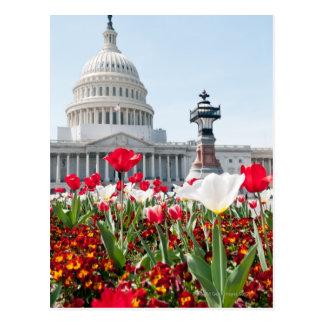 Cartão Postal Cama de flor na primavera em Washington, C.C.