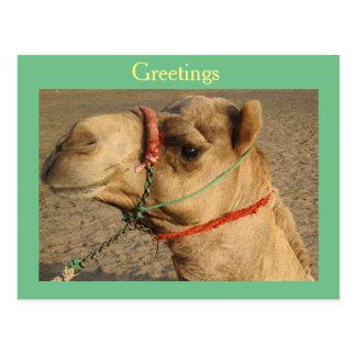 Cartão Postal Camelo
