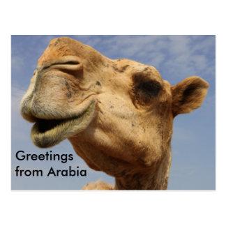 Cartão Postal Camelo do Dromedary