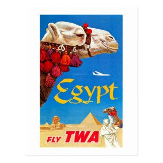 Cartão Postal Camelo e pirâmides do vintage