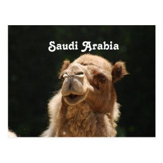Cartão Postal Camelo saudita