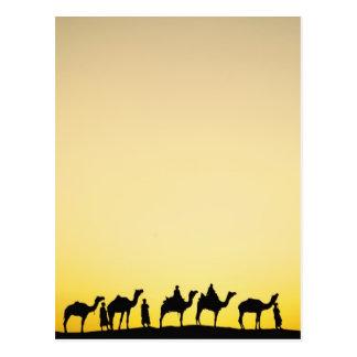 Cartão Postal Camelos e motorista do camelo mostrado em silhueta