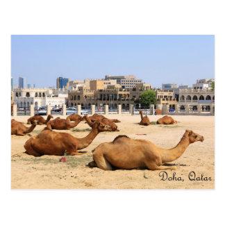 Cartão Postal Camelos em Doha
