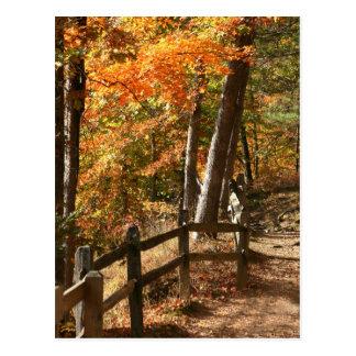 Cartão Postal Caminho do outono