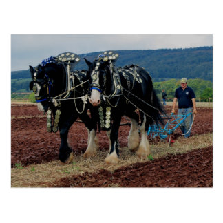 Cartão Postal Campeonatos Ploughing 2011 do cavalo britânico de