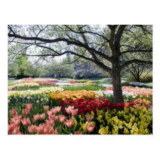 Cartão Postal Campo das flores em uma manhã do primavera