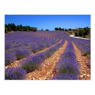 Cartão Postal Campo de Lavendar em Provence