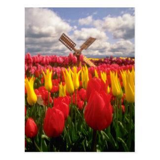 Cartão Postal Campo vermelho da tulipa, flores de Oregon