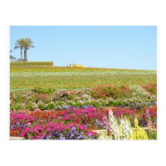 Cartão Postal Campos de flor de Carlsbad