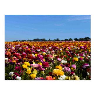 Cartão Postal Campos de flor em Califórnia