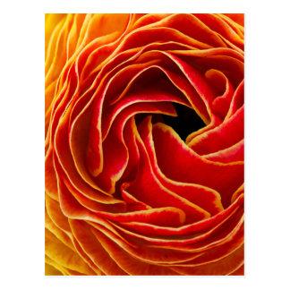 Cartão Postal Campos de flor macro Carlsbad da flor |, CA