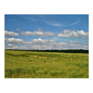 Cartão Postal Campos de trigo