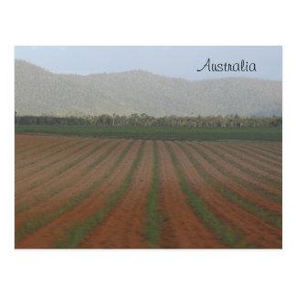 Cartão Postal Campos do cana-de-açúcar --- Queensland, Austrália