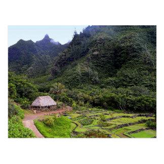Cartão Postal Campos do Taro do jardim de Limahuli, Kauai