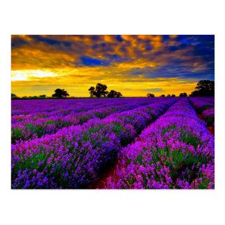 Cartão Postal Campos roxos