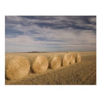 Cartão Postal Canadá, Saskatchewan, Craik: Hayrolls/outono