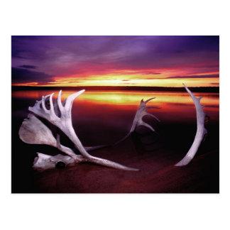 Cartão Postal Canadá, territórios do noroeste, lago whitefish