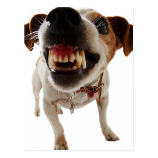 Cartão Postal Cão agressivo - cão irritado - cão engraçado