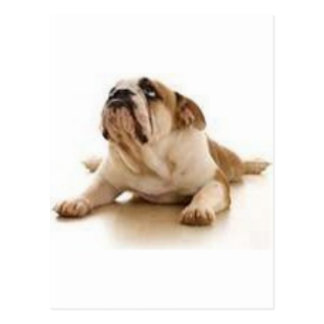 Cartão Postal (cão) caro obrigado do senhor você para deixar-me