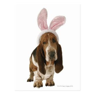 Cartão Postal Cão de Basset com orelhas do coelho