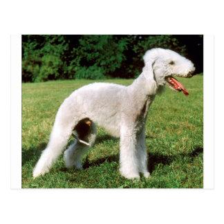Cartão Postal Cão de Bedlington Terrier