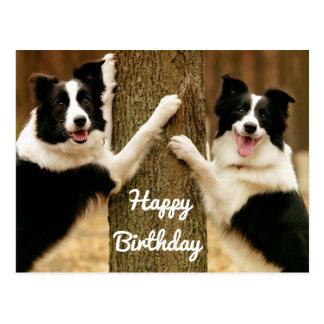 Cartão Postal Cão de filhote de cachorro de border collie do