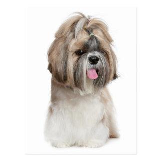 Cartão Postal Cão de filhote de cachorro de Shih Tzu - amor,