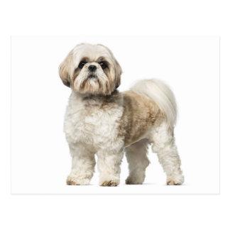 Cartão Postal Cão de filhote de cachorro de Shih Tzu - olá!,