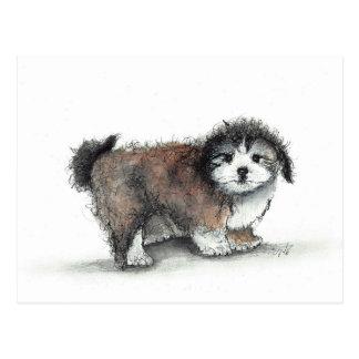 Cartão Postal Cão de filhote de cachorro de Shihtzu, animal de