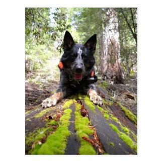 Cartão Postal Cão de funcionamento máximo em caninos da