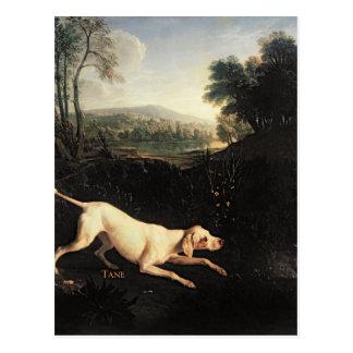 Cartão Postal Cão de Louis XIV, Tane