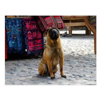 Cartão Postal Cão de Shar Pei, Ollantaytambo, Peru